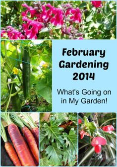 February Gardening 2014 - Ideas for what we should be doing! thelinkssite.com
