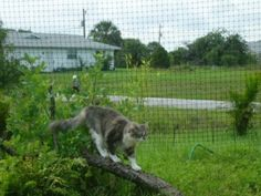 The Purr…fect Cat Fence is the first complete, freestanding, backyard fence enclosure for cats. Now cats can safely enjoy all the benefits of the great outdoors, without you worrying about their sa...