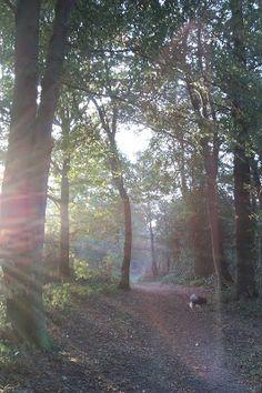 "Herbstspaziergang (oder ""Laubrauscheln!"")"