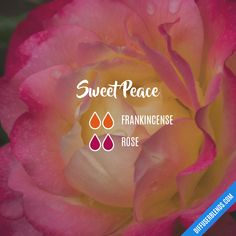 Sweet Peace — Essential Oil Diffuser Blend. Frankincense rose. Essential Oils Guide, Essential Oil Scents, Rose Essential Oil, Essential Oil Perfume, Essential Oil Diffuser Blends, Doterra Essential Oils, Doterra Diffuser, Doterra Oil, Pure Essential