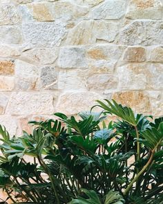 Coolum Random Ashlar walling adds texture and warmth to the dining area of this hotel dining area. Wall Exterior, Exterior Cladding, Wall Cladding, Exterior Design, Melbourne Garden, Weatherboard House, Sandstone Wall, Farmhouse Fireplace, Small Space Gardening