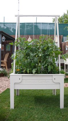 Tomato Garden container....this is such a great design