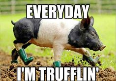 Trufflin'