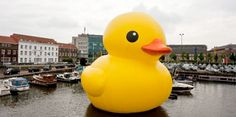 giant inflatable rubber duck created by dutch artist florentijn hofman - after the popular yellow rubber duck toy.           Inflatable 12 m [40 ft] rubber duck floats in lakes and canals of different cities and brings smiles to the faces of anyone who sees it
