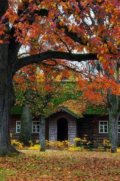 Fall in St, Micheal, Russia, (via - senjor - Осень в Михайлов. Art Et Nature, Autumn Nature, Autumn Trees, Autumn Leaves, Autumn Harvest, Forest Cottage, Autumn Cozy, Seasons Of The Year, Cabins And Cottages
