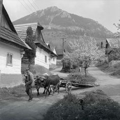 Heart Of Europe, Farm Life, Old Photos, Flora, Landscape, Retro, World, City, Nature