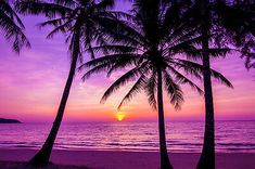 BEAUTIFUL BEACH SUNSET CANVAS PICTURE #258 STUNNING PHOTOGRAPHY A1 CANVAS     eBay