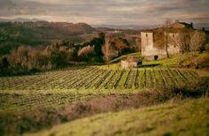 Tenuta di Ghizzano: dopo i vini, arriva l'osteria biodinamica