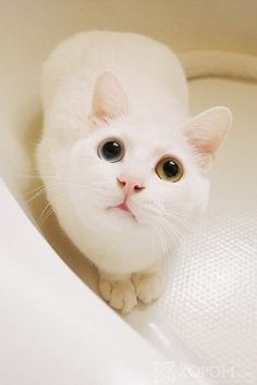 Lovely cats ~~ Share the Cute Cats to Make you Smile. Have a Nice Day! Enjoy and share with you :) #cat #oohpet