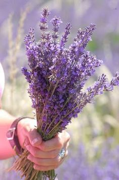 Sunshine Lavender Farm: Lavender Holiday to Provence, France in 2014