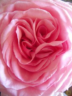 Roses are.... PINK
