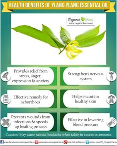 The health benefits of Ylang-Ylang Essential Oil can be attributed to its properties like anti depressant, anti seborrhoeic, anti septic, aphrodisiac, hypotensive, nervine and sedative  This ...