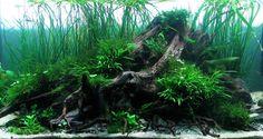 Mervent par Poups. #aquascaping #aquarium #fishtank