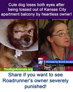 Justice for Roadrunner! Sign and Retweet Now: http://www.yousignanimals.org/redirect.php?t=605 … #animals