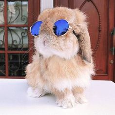 cute animals Mini-Pet Sunglasses for Rabbits! With these adorable Mini-Pet Sunglasses from Bunny Supply Co, you can dress your furry little friend up like the movie star they are! Cute Baby Bunnies, Baby Animals Super Cute, Cute Little Animals, Cute Funny Animals, Cute Babies, Cute Pets, Funny Bunnies, Little Pets, Cute Bunny Pictures