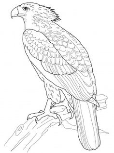 lots of bird coloring pages