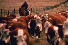 Ranching in Montana. I worked our ranch every summer when I was younger.