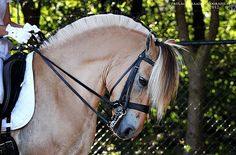 Fjord Horse, Balcony Railing, Ponies, Equestrian, Pretty, Photos, Animals, Food, Pictures