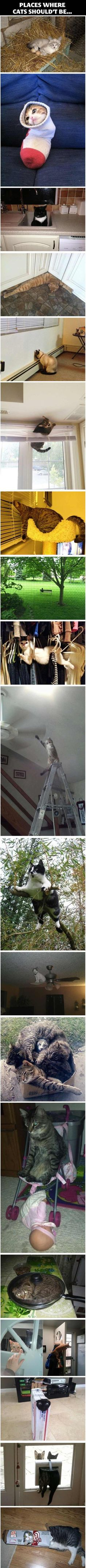 Places where cats shouldn't be… - One stop humour :: Lc- I love the 90 degree angle cat a whole lot, but I feel a little bad for the frying pan and ceiling fan kittehs