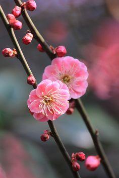 素晴らしい花の姿