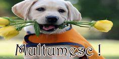 Felicitari de multumire - Multumesc! Labrador Retriever, Nigeria Travel, Dogs, Animals, Facebook, Emoji, Personality, Happy Birthday, Quote