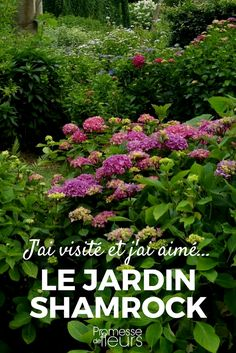 Le jardin Shamrock et sa collection d'hydrangéas