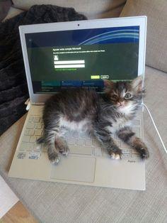 Un panier à #chat High Tech !! #kitten #cat #funny #lolcats