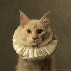 Cats Wearing White Collars (Ruffs) | Content in a Cottage Crazy Cat Lady, Crazy Cats, Cute Cats, Funny Cats, Foto Fantasy, Gatos Cats, Art En Ligne, Photo D Art, Vintage Cat