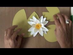 Water lily paper flower tutorial