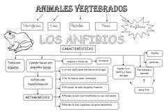 *MIS COSAS DE MAESTRA*: Animales Vertebrados: Esquemas Art Activities For Kids, Science For Kids, Science And Nature, Teaching Science, Life Science, School Items, Vertebrates, Happy Kids, Reptiles