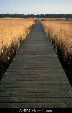 ......board walk and keep your eyes open for alligators.  K.W.