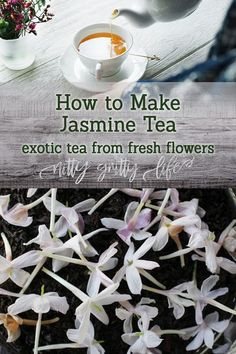 How to Make Exotically Scented Jasmine Tea at Home #jasmine #tea #recipes #beverages #herbalism #herbs Healing Herbs, Medicinal Herbs, Holistic Healing, Natural Healing, Jasmine Plant, Wild Edibles, Flower Tea, Tea Blends, Tea Recipes