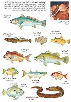 انواع الاسماك - بحث Google‏ Types Of Fish, Beautiful Landscapes, Paper Crafts, Fishing, Marketing, Gone Fishing, Sup Fishing, Paper Craft Work, Peaches