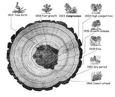 Treacy and Ms. Hoover art 1 Tree rings, a Personal History Homework Due: Wed, Feb. 2013 ASSIGNMENT: With pencil, eraser, sketchbook (or paper) create a personal autobiographical tree… Funny Commercials, Funny Ads, Global Warming Poster, Tree Rings, Commercial Ads, Science And Nature, Earth Science, Science Geek, Types Of Wood