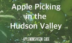 Hudson Valley Apple Picking Locations Westchester County, Dutchess County, Orange County, Ulster County