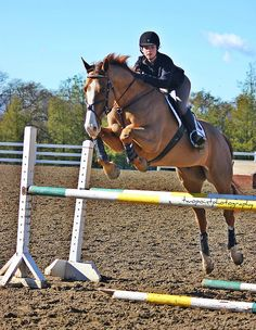 twopointphotography: Hollie and Zeppelin(: Cute Horses, Pretty Horses, Horse Love, Beautiful Horses, Show Jumping Horses, Show Horses, Horse Photos, Horse Pictures, Chestnut Horse