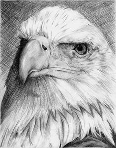 O excepción www Pencil Art Drawings, Bird Drawings, Animal Drawings, Bugs Bunny Drawing, Eagle Sketch, Eagle Drawing, Drawn Art, Eagle Tattoos, Art Pictures