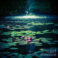 Water Lily Pond 6