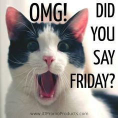 Gotta love the funny cat quotes! We all made it through the week and some people are just starting their Friday's (like me) I hope everyone has a happy day! Humor OMG…It's Feline Friday! Friday Quotes Humor, Happy Friday Quotes, Funny Friday Memes, Monday Humor, Weekend Quotes, Cat Quotes, Happy Quotes, Funny Quotes, Funny Memes