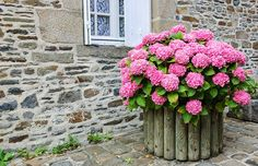 Create beautiful pots and planters with hydrangeas. Check out these 25 hydrangea pot and planter arrangements. Hydrangea Potted, Hortensia Hydrangea, Hydrangea Bush, Hydrangea Landscaping, Hydrangea Garden, Hydrangea Flower, Flower Pots, Landscaping Ideas, Flowers Garden