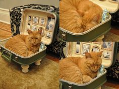 upcycled cat bed Cat bed from upcycled suitcase in fabric diy with suitcase pet bed PET Animal. Must look out for old suitcases to make my boys some cool beds ! Diy Cat Toys, Cats Diy, Pet Beds, Dog Bed, Diy Jouet Pour Chat, Diy Cat Bed, Bed Steps, Vintage Suitcases, Vintage Luggage
