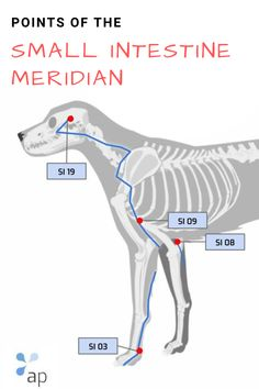 Acupuncture Points, Acupressure Points, Meridian Points, Dog Anatomy, Dog Life, Thunder, Chihuahua, Healing, Projects
