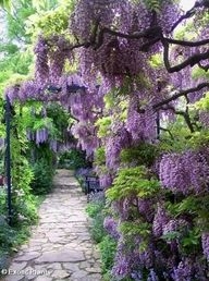 love wisteria…anywhere. Incredible flagstone garden path with all the fab wisteria hanging down every where. This is definitely what I expect when I get to heaven. Garden Paths, Garden Landscaping, Walkway Garden, Garden Steps, Landscaping Design, Garden Art, Wisteria Sinensis, Beautiful Flowers, Beautiful Places
