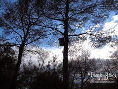 Caja nido para abubillas. Plants, Nesting Boxes, Plant, Planting, Planets