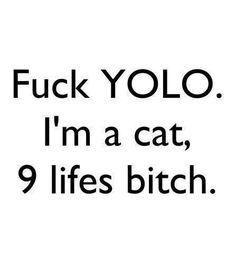 #cat #bitches