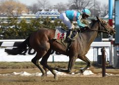 My Man Sam(2013)(Colt) Trappe Shot- Lauren Bird By Arch. 5x4 To Mr. Prospector, 5x5 To Raise A Native, 5(F)x5(F) To Northern Dancer. 9 Starts 1 Win 3 Seconds 1 Third. $383,200. Ran 2nd In Blue Grass, 3rd Discovery H(G3).