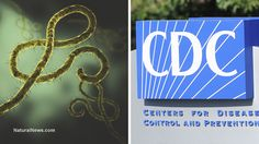 (NaturalNews) There's no subtle way to say this, so I'll just state it outright: The U.S. Centers for Disease Control (CDC) has become a clear and present danger to the public health of all America...
