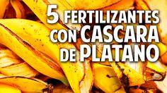 5 fertilizantes con cascara de platano - Potasio - Mas Frutos @cosasdelj...