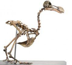 dodo-white.jpg