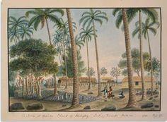 Victor Raoulx : Ses bénéfices furent réinvestis dans la plantation de canne à sucre et la rhumerie d'Atimaono qu'il avait acquises en copropriété peu après la mort de William Stewart. Il s'intéressa ensuite au coprah et chargea son fils de planter 14 000 cocotiers dans la plaine de Papara-Mataiea.